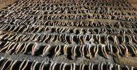 Батыс Қазақстан облысында 800-ден астам киік мүйізі тәркіленді