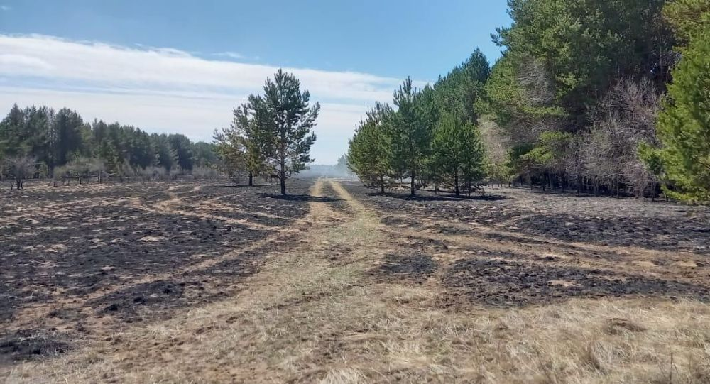 Последствия лесного пожара в Павлодарской области