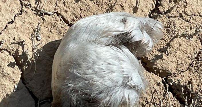 На месте крушения самолета Су-30СМ обнаружили десятки фрагментов тушек погибших птиц