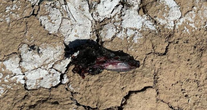 Фрагменты останков птиц, обнаруженные комиссией по расследованию крушения самолета Су-30СМ