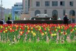 Тюльпаны в Нур-Султане