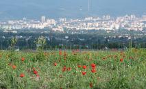 Алматы маңы