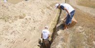 В Туркестанской области зароют траншеи, в которых погибли десятки черепах, змей и ящериц