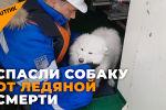 Как экипаж ледокола спас собаку, потерявшуюся во льдах