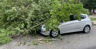 Сломанное сильным ветром дерево упало на припаркованную во дворе машину в Алматы