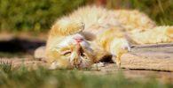 Кошка нежится на солнце