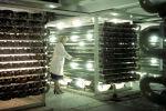 В цехе по приготовлению хлореллы, архивное фото