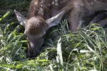 Катон-Карагайский олений парк в ВКО