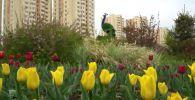 Как цветут тюльпаны в Нур-Султане