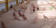 В столице продолжается работа по развитию фауны зеленого пояса - видео