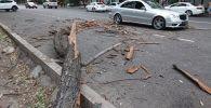 Упавшая на автомобили по улице Маметовой ветка дерева