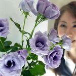 Геномодифицированная голубая роза