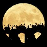 Необычные зрители Олимпиады - силуэты птиц на фоне восходящей полной Луны над стадионом в Токио