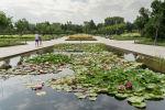 Ботаникалық бақ, Алматы