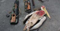 Застреленный пеликан
