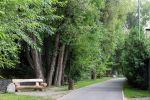 На терренкуре оздоровили зеленый фонд, высадив почти 5 тысяч единиц кустарников и 150 деревьев