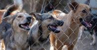 87 собак и 11 кошек обнаружили зооволонтеры на черной передержке в дачном поселке Али