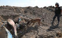 Поиски пропавших при взрывах в Жамбылской области