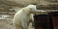 Метеоролог побывал в Арктике