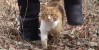 Запуганный кот разрыдался от любви мужчины, который стал его первым другом Животное в кризисе - видео