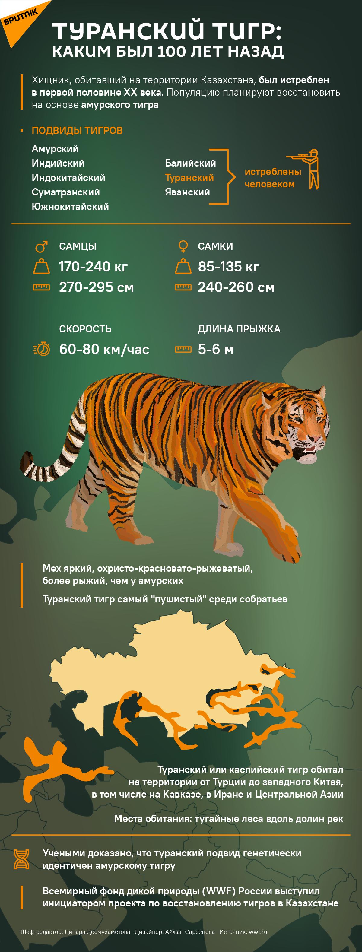 Туранский тигр: каким был 100 лет назад