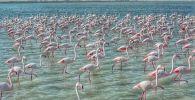 Фламинго снова прилетели в Мангистау