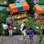 Выставка Тюльпаномания в Сигнапуре