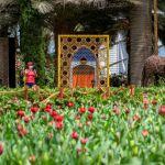 Тюльпаномания в Сигнапуре