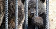 Медвежонок смотрит сквозь решетку