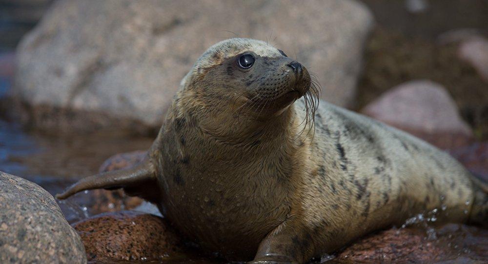 Архивное фото тюленя