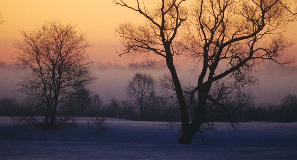 Зима, туман