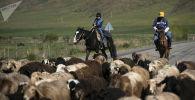 Пастухи