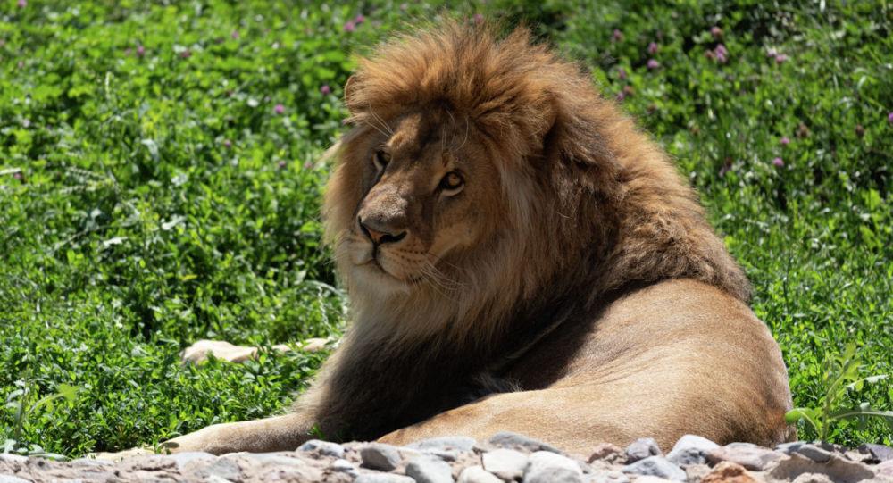 Животные зоопарка в Алматы