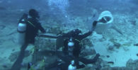 Дайверы кормят акул без клетки - видео