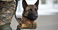 Служебная собака ВС РК