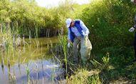 Премьер-министр Аскар Мамин на территории Кояндинского водохранилища дал старт экологической акции
