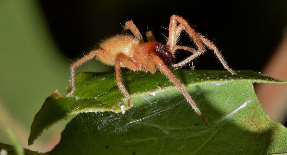 Ядовитый паук, иллюстративное фото