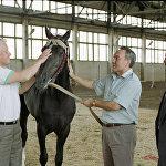 Б. Ельцин и Н. Назарбаев на конном заводе