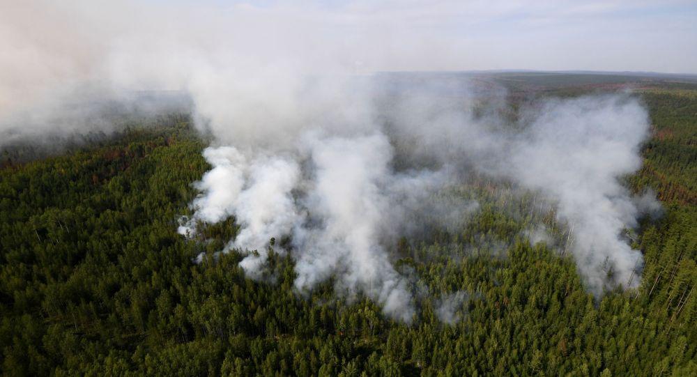 Пожар в лесу, иллюстративное фото