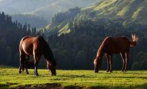 Лошади, архивное фото