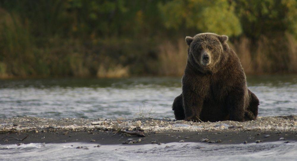 Медведь, иллюстративное фото