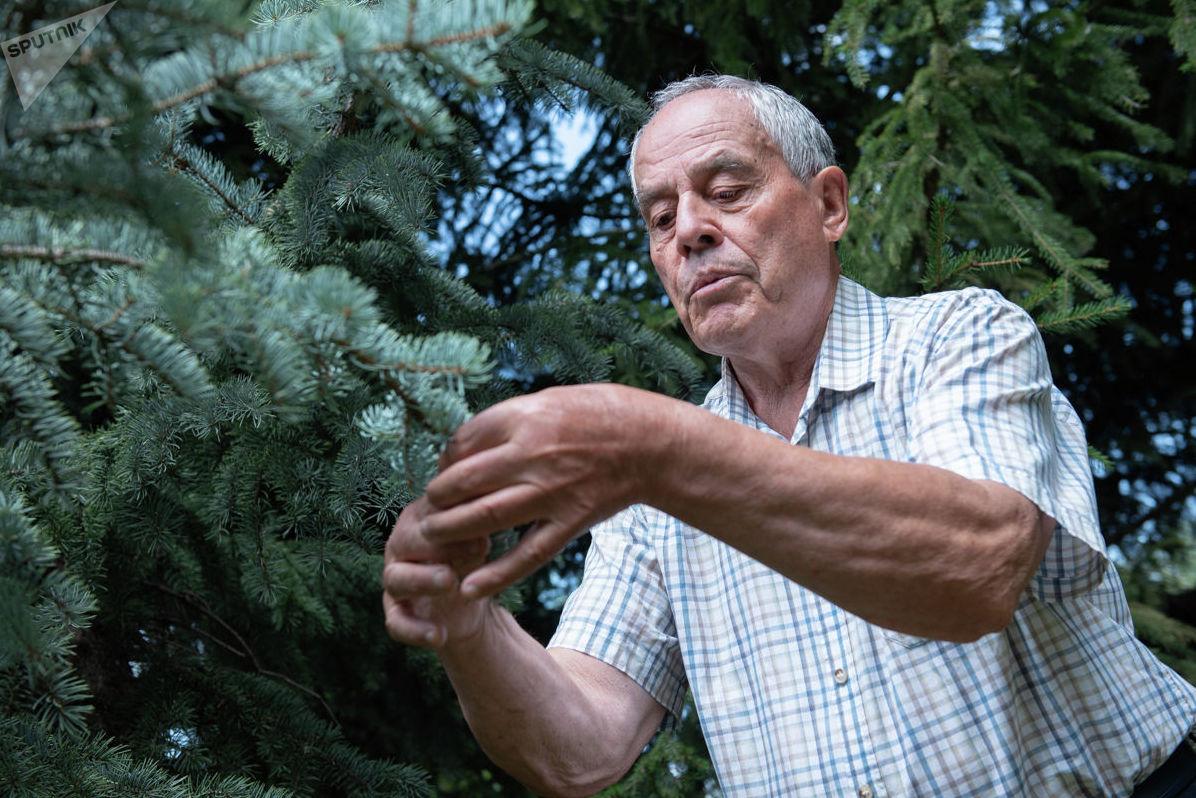 Селекционер рассказывает о голубых елях