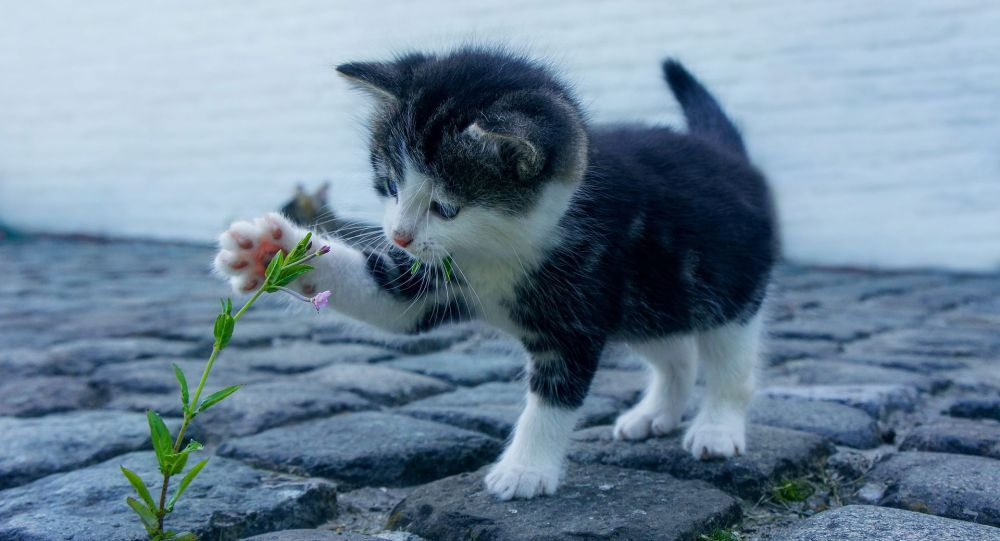 Котенок, иллюстративное фото