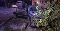 Автомобиль врезался в дерево в Алматы