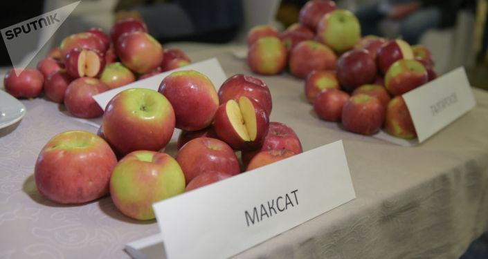 Сорт яблонь Максат включен в Государственный реестр селекционных достижений, допущенных к использованию в Казахстане