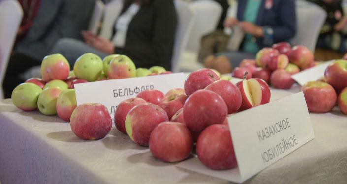 Казахстанские ученые путем скрещивания апорта  с современными интенсивными сортами вывели ряд ценных сортов яблок