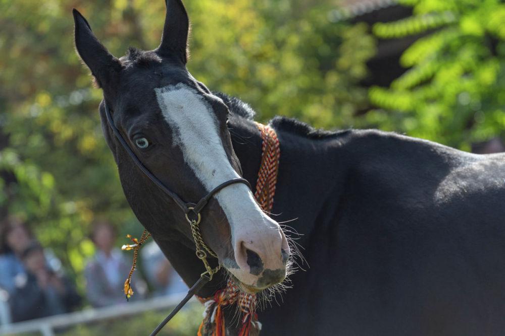 "Выставка лошадей ""Тулпар-2019"""