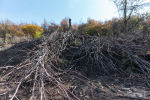 Деревья, вырубленные в саду Жумагуль Орымбаевой