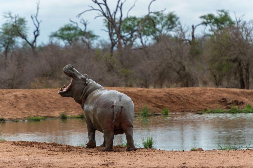Королевство Эсватини в Южной Африке славится девственными заповедниками. В национальном парке Хлане обитают львы, бегемоты, слоны и другие животные.