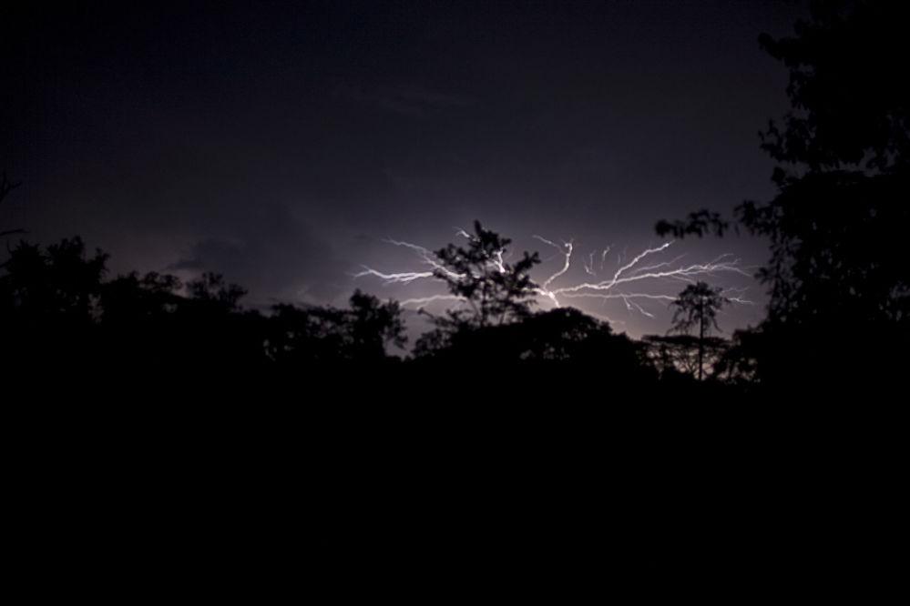 Национальный парк Сапо в Либерии — второй по величине тропический лес в Западной Африке. Здесь можно увидеть шимпанзе, слонов и бегемотов.